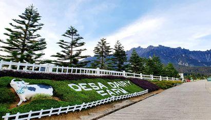 Kinabalu Park / Desa Farm + Poring Hot Spring Day Tour