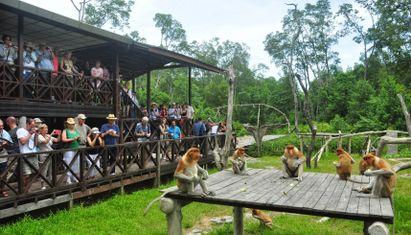 Sepilok Orangutan Rehabilitation and Labuk Bay (Min 2 Pax)